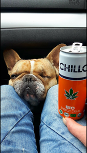 CHILLO_0019_#Kasias_Bulldogge_CHILLO.png
